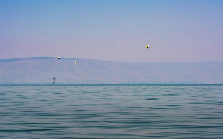 Bird on the Sea of Galilee